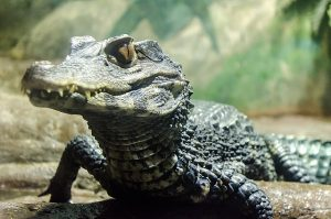 Wrestling the Alligator…and Winning