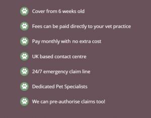 4Paws Pet Insurance Review